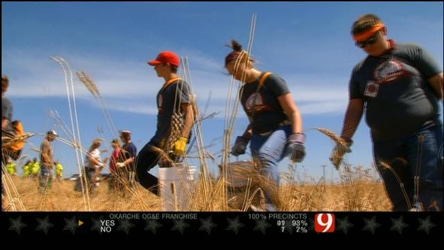 Dozens Of Volunteers Comb, Clean El Reno Area Wheat Fields