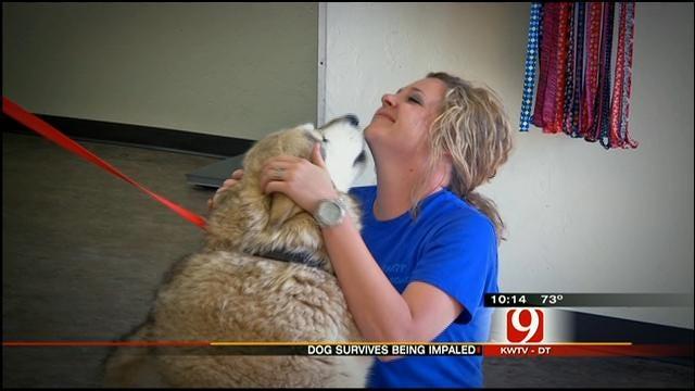 Oklahoma Tornado Miracle Dog Defies The Odds