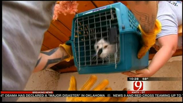 Moore Woman Finds Cat In Rubble Of Home