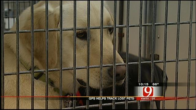 GPS Devices May Help Track Down Lost Oklahoma Pets