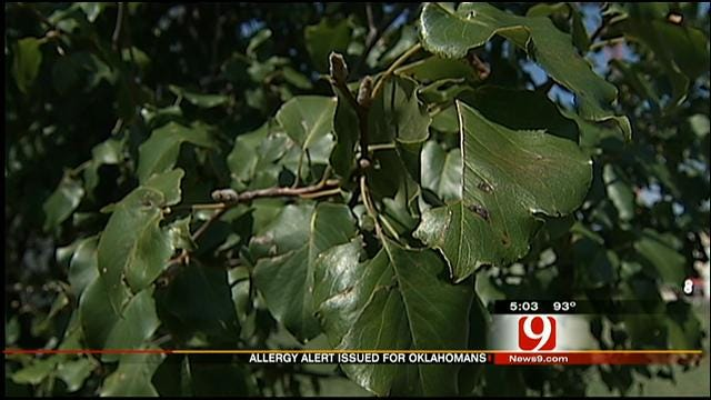 High Allergy Alert Issued In Oklahoma This Weekend