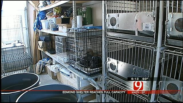 Edmond Animal Shelter At Capacity