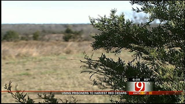 OK Rep. Hatches Plan To Eradicate Flammable Eastern Red Cedar