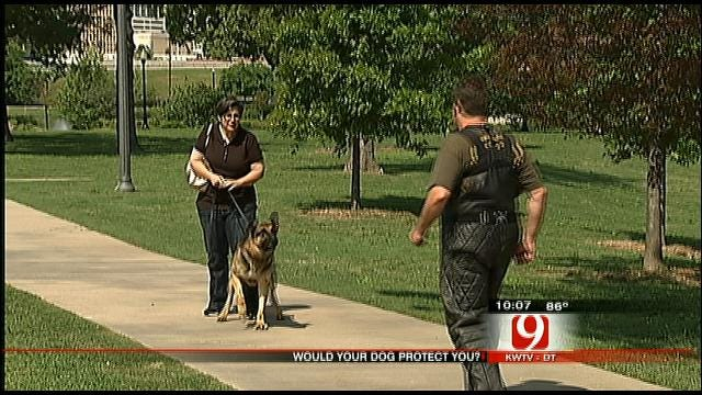 Would Your Dog Protect You From Danger?