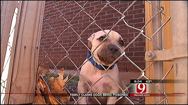 Del City Dog Owners Wonder If Their Pets Have Been Poisoned