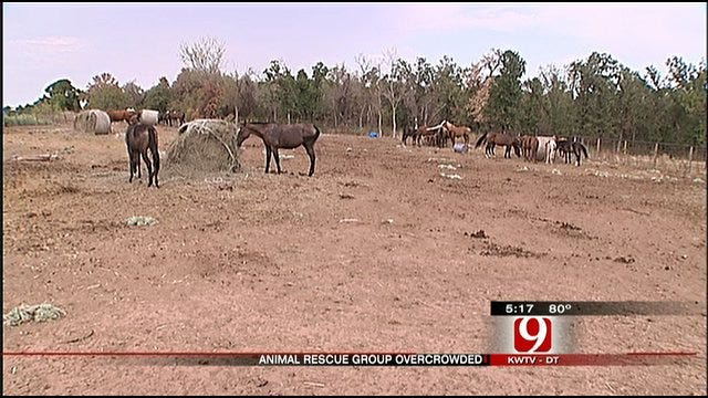 Hay Shortage Taxes Jones Animal Rescue Facility