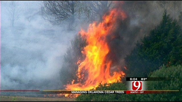Red Cedars Still A Burning Issue In Oklahoma