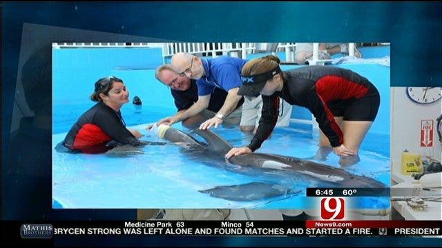 Oklahomans Help Famous Dolphin Swim Again