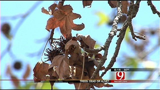 Stressed-Out Trees In Oklahoma Could Bounce Back