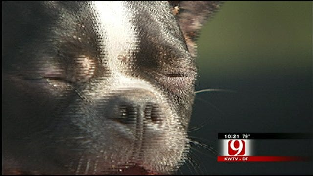 Piedmont Family Find Missing Dog After Tornadoes