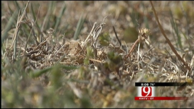 Dry Winter Leads To Dry Spring And Little Green
