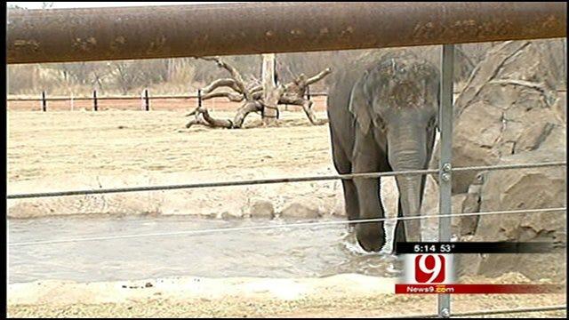 Sneak Peak Behind OKC Zoo's New Elephant Exhibit