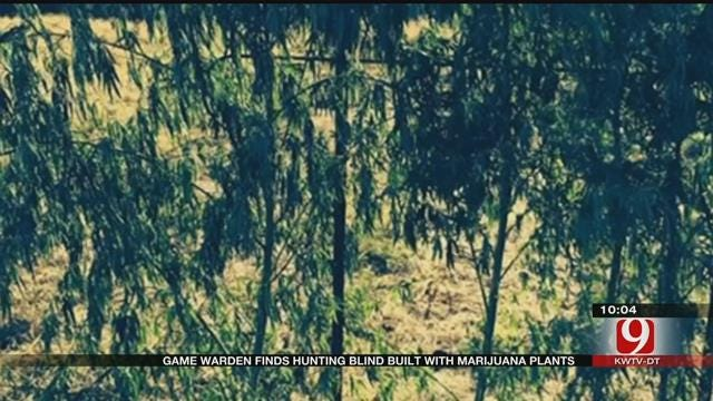 Three Men Charged After Game Warden Finds Hunting Blind Made Out Of Illegal Plants