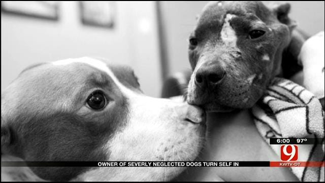 Owner Of MWC Severely Neglected Dogs Turns Self In
