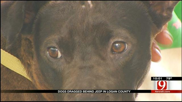 GRAPHIC: Dog Dragged Behind Vehicle Rescued In Logan County