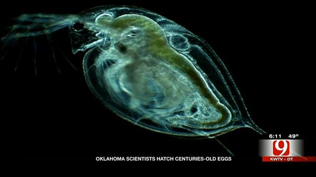 700-Year-Old Eggs Hatch