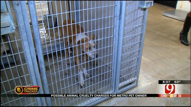 OKC Dog Owner Could Be Charged With Animal Cruelty