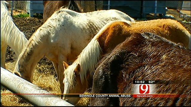 Deputies: Worst Case Of Animal Abuse They've Ever Seen