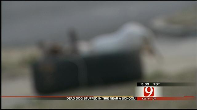 Dead Dog Left Decomposing Near OKC School For Days