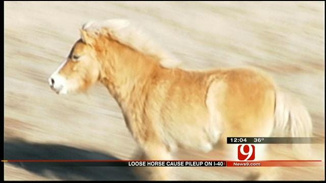 Workers Round Up Loose Miniature Horses In SE OKC