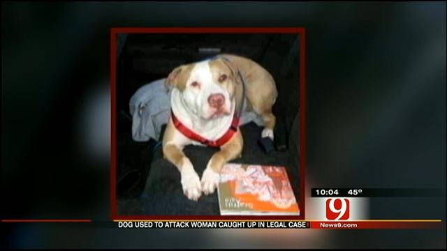 City Of Edmond Fights To Keep Pit Bull, Ordered To Attack, Alive