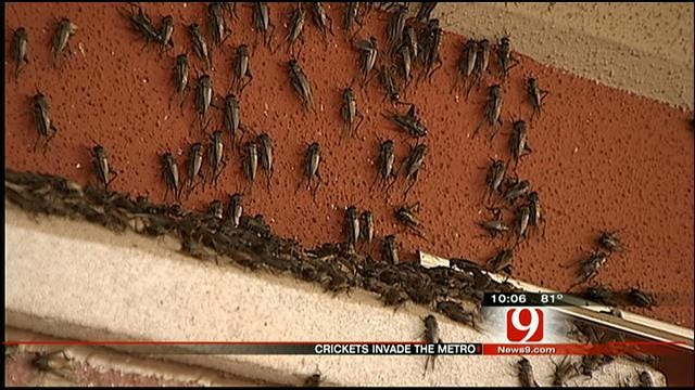 OKC Cricket Infestation Is Creeping People Out
