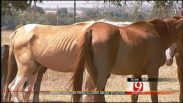 One Horse Dead, Others Starving In Grady County