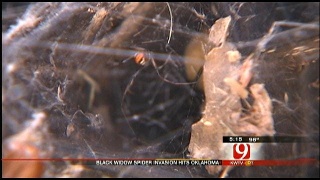 Oklahoma Residents Battling Black Widows