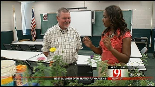 Best Summer Ever: Having A Butterfly Garden