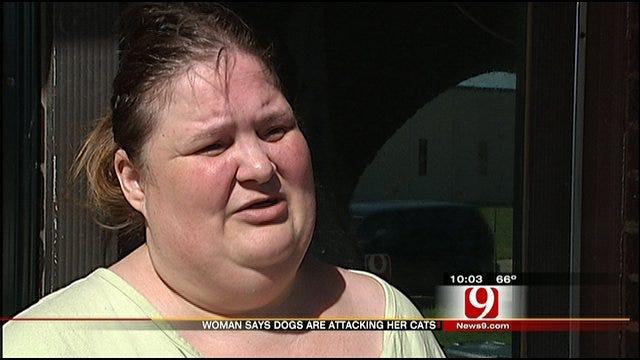 Woman Says Pit Bulls On The Loose Terrorize NE OKC Neighborhood