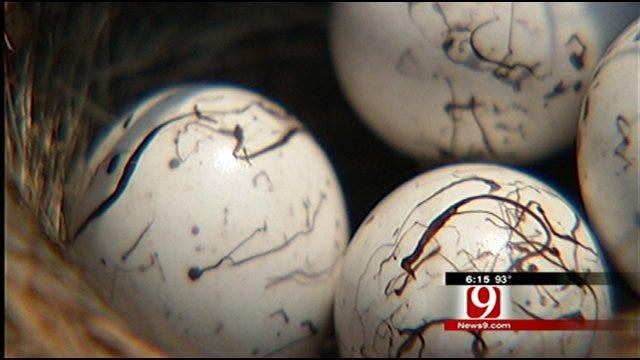 Bird's Nest Intact After Tornado Strikes