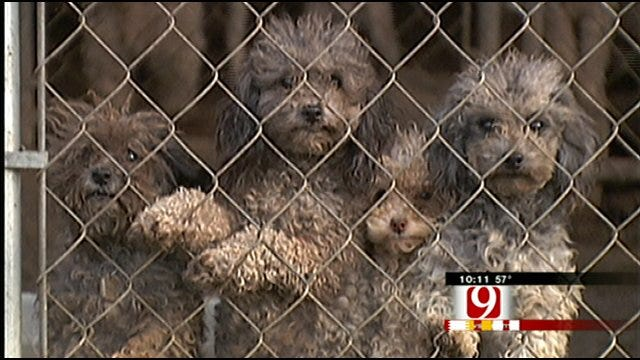 Fight Continues Over New Rules For Regulating Oklahoma Dog Breeders