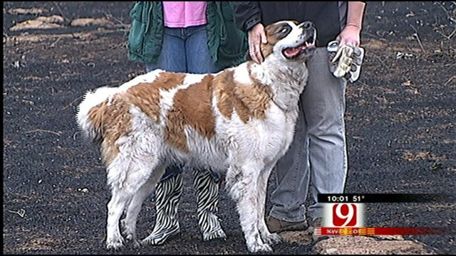 Harrah Animal Rescue In Need Of Rescuing