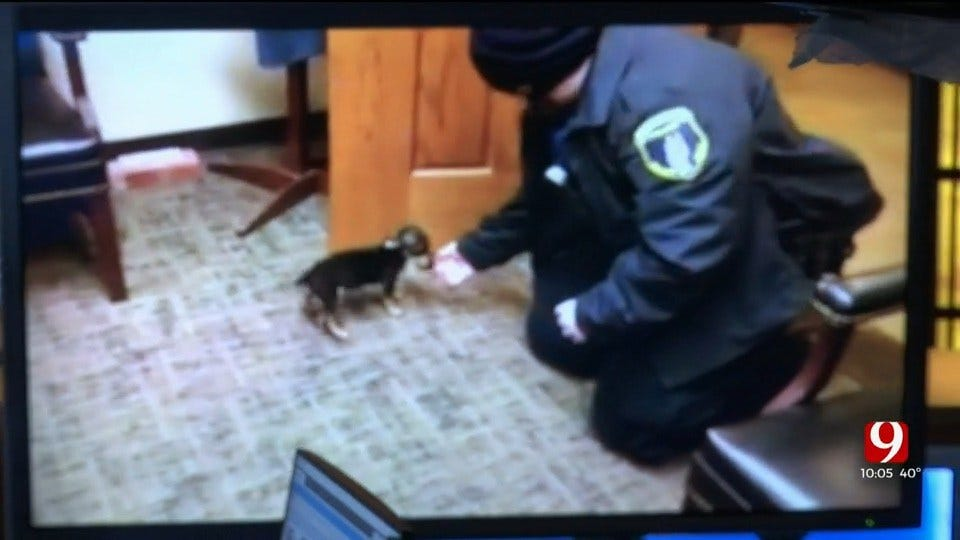 Clinton Police Find Alleged Abused Puppy, Minor Taken Into Custody