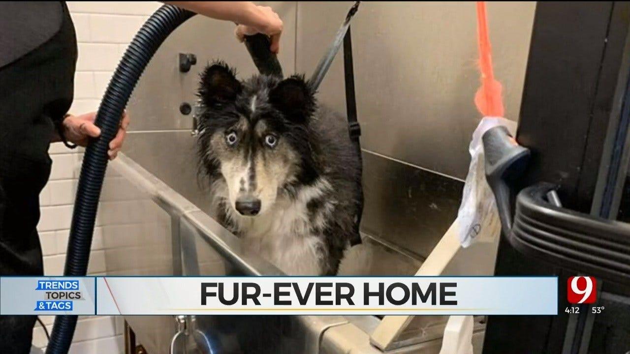 Trends, Topics & Tags: Husky Gets Fur-ever Home