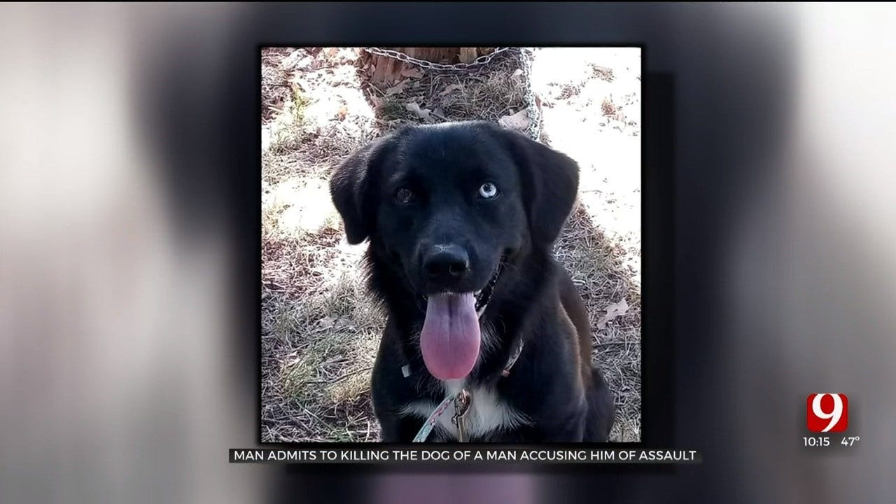 Man Mourns Loss Of Service Dog After Dog Was Found Stabbed To Death In Norman