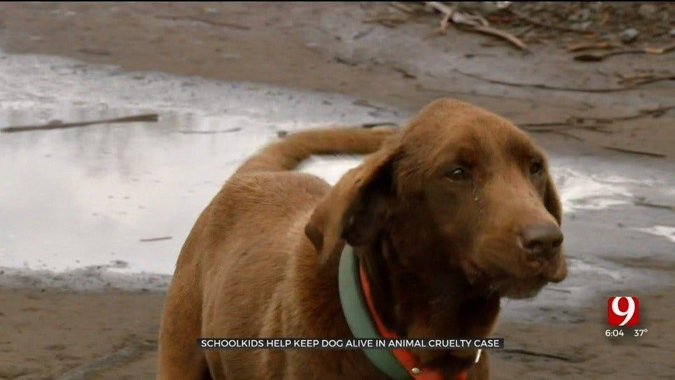 Children Help Keep Dog Alive In Animal Cruelty Case In Agra, Investigator Says