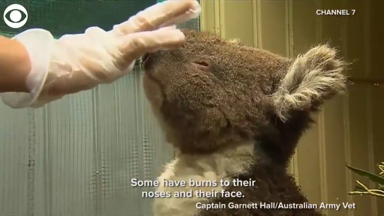 How Australian Residents Try To Save Animals From Bushfires