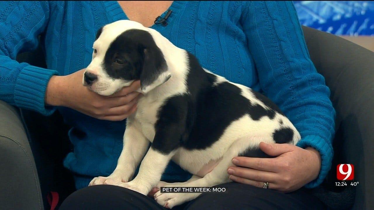 Pet of the Week: Moo