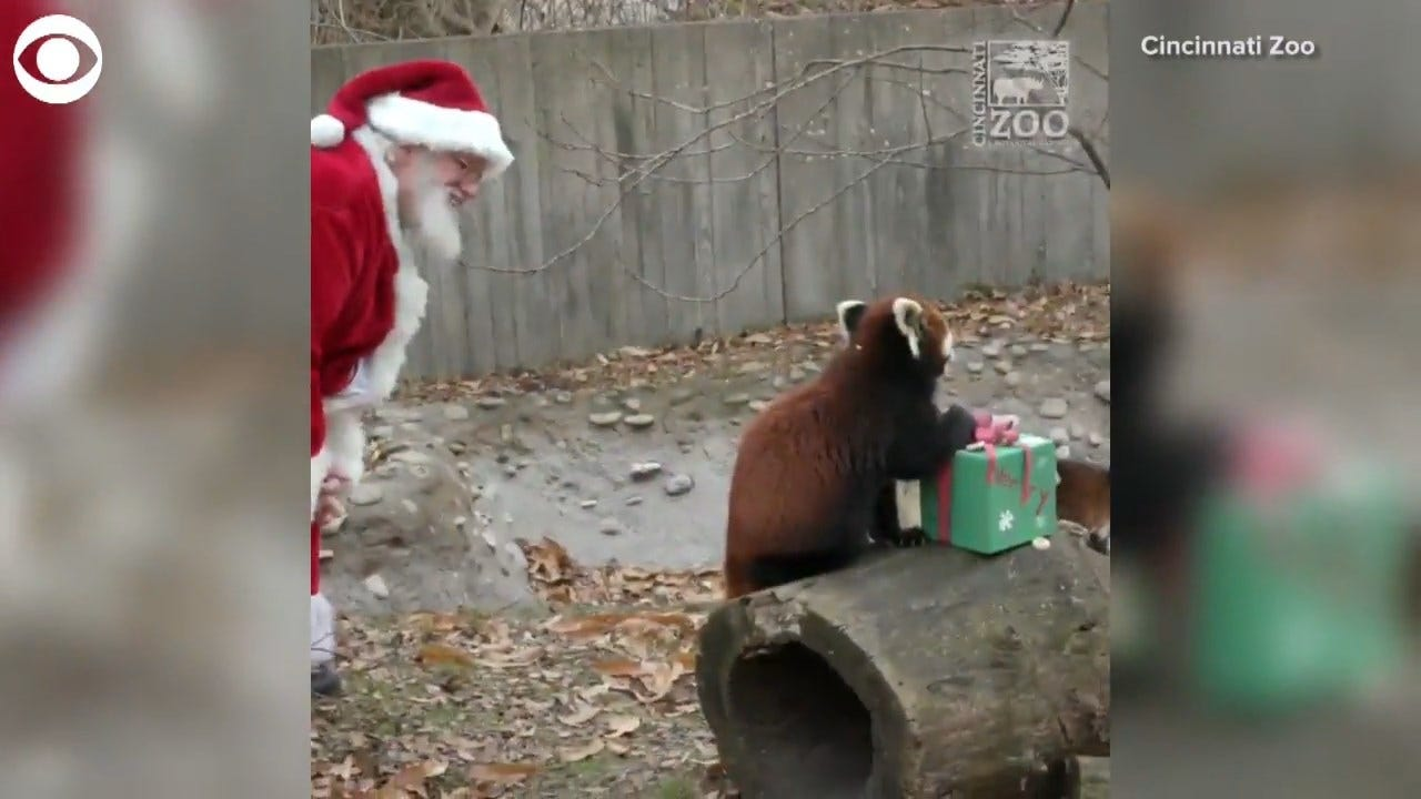 SO CUTE! Santa Delivers Gifts To Zoo Animals