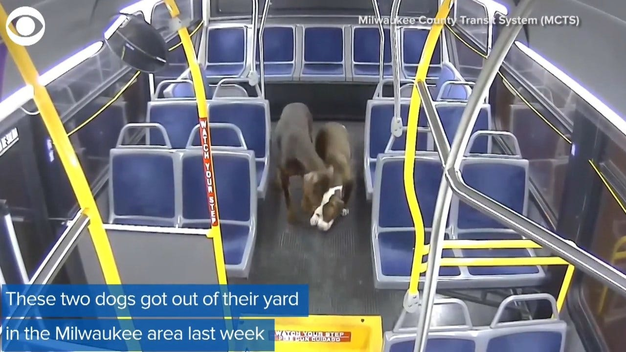 WATCH: Bus Driver Rescues 2 Dogs