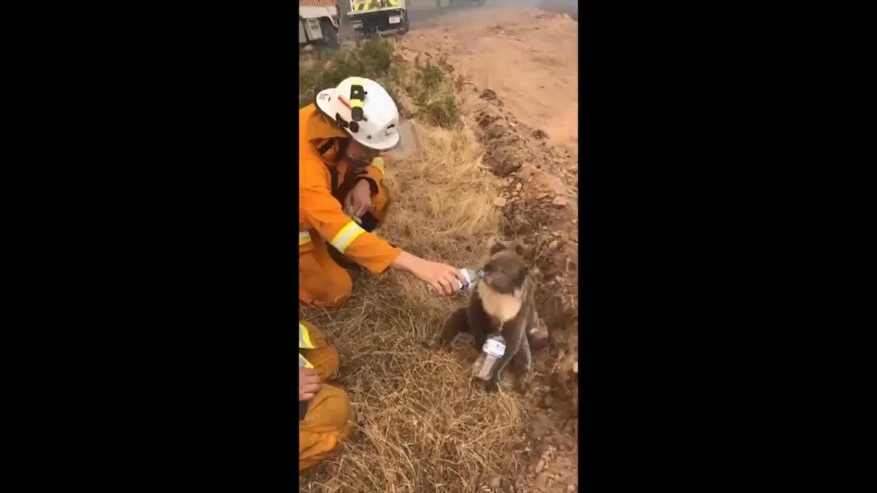 WATCH: Firefighter Offers Much-Needed Water To Thirsty As Bush Fires Rage Across Australia