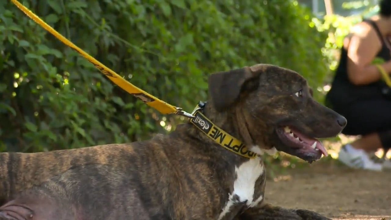 Walkers 'Rent' A Dog To Help Rescue Dogs