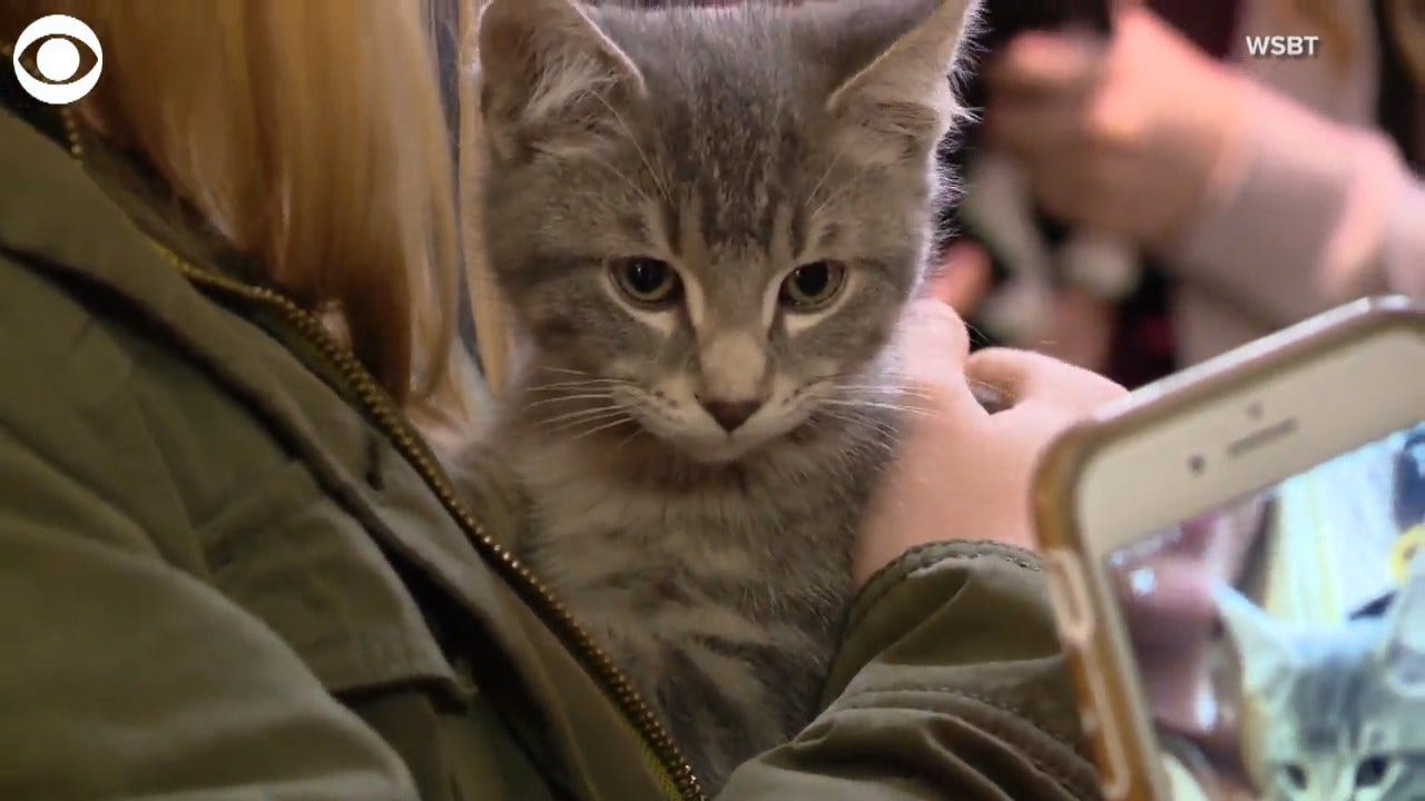 ADORABLE: A College Brought In Kittens To Help Students With Finals Stress