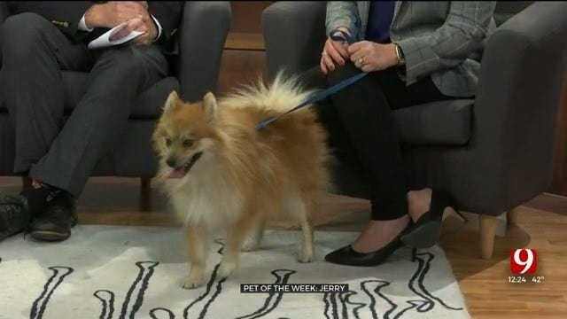 Pet of the Week: Jerry