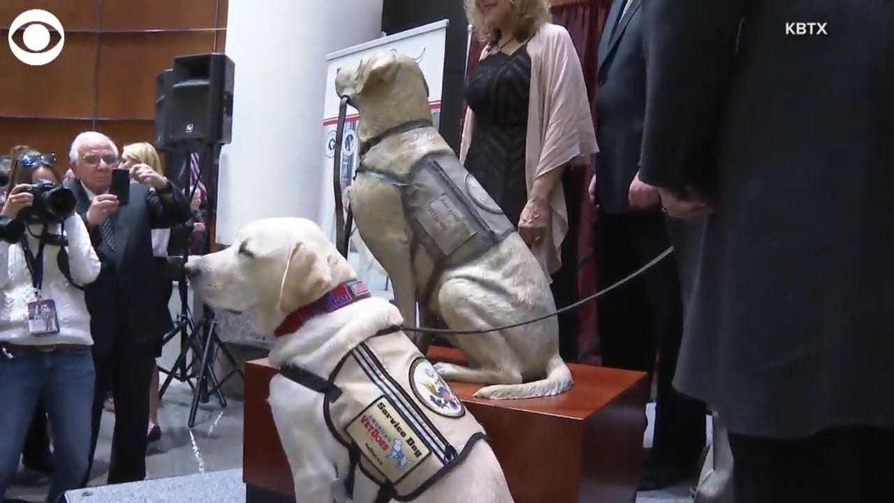 WATCH: A Statue Of Sully, George H.W. Bush's Service Dog, Unveiled