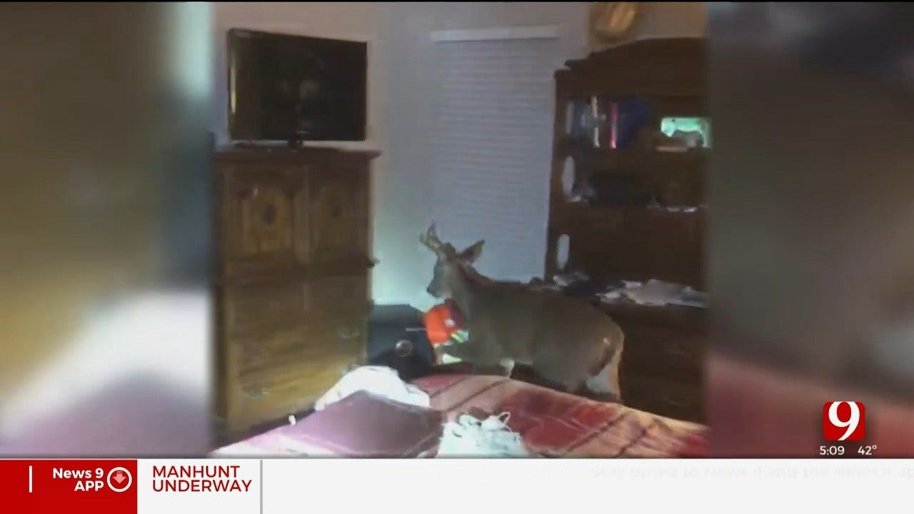 WATCH: Deer Crashes Through Edmond Home, Causes Damage