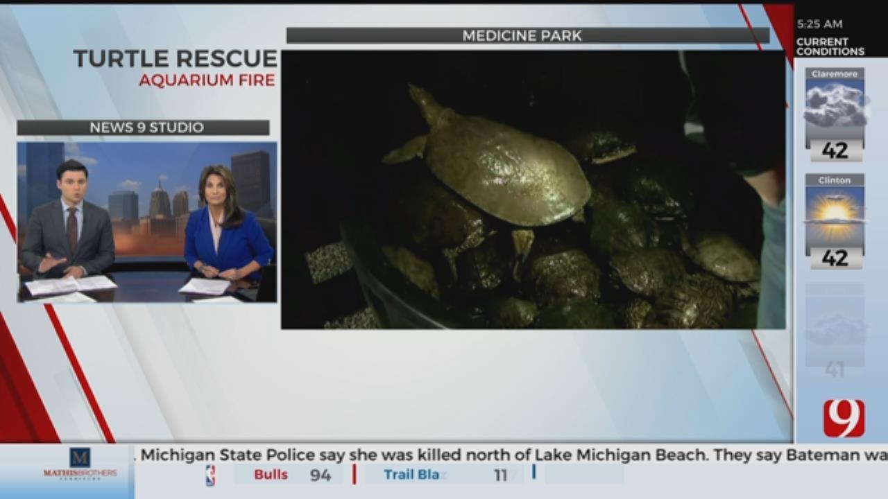 Dozens Of Turtles Rescued From Aquarium Fire