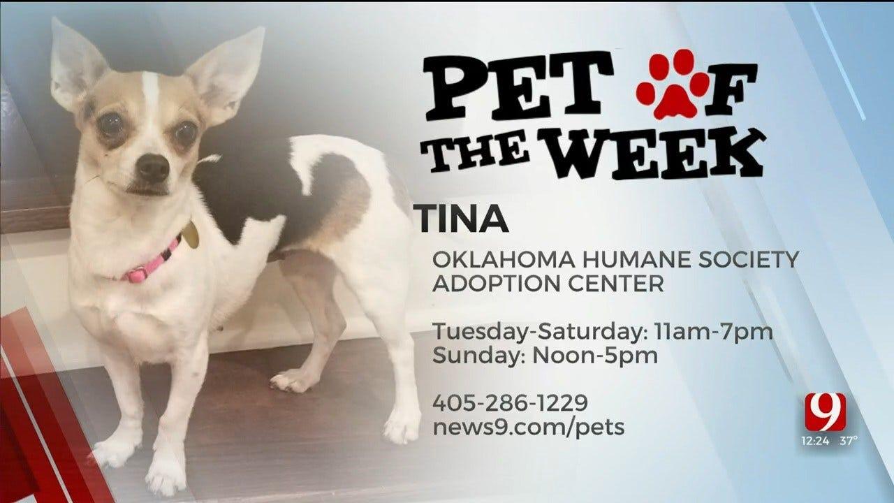Pet of the Week: Tina