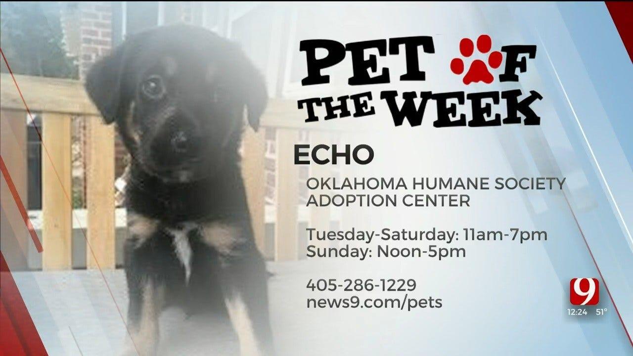 Pet of the Week: Echo